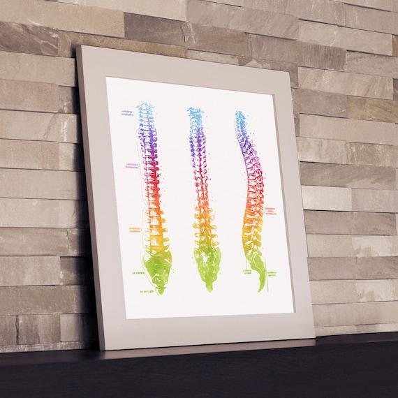 Wirbelsäule Anatomie Fotodruck Aquarell Wirbelsäule Druck | Etsy