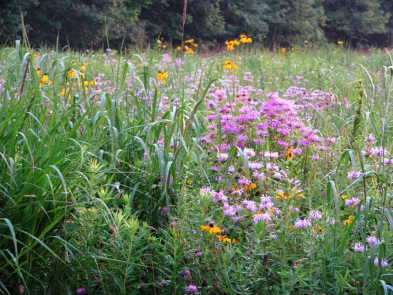 Medow,Perfect Pollinator Mix or grass cover crop to help prevent erosion Seed Mix Shortgrass Native Grass