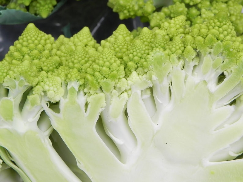 VERONICa ROMANESCO BROCCOFLOWER Cauliflower seeds Organic Non-GMO Keeps its lime-green color even when cooked!