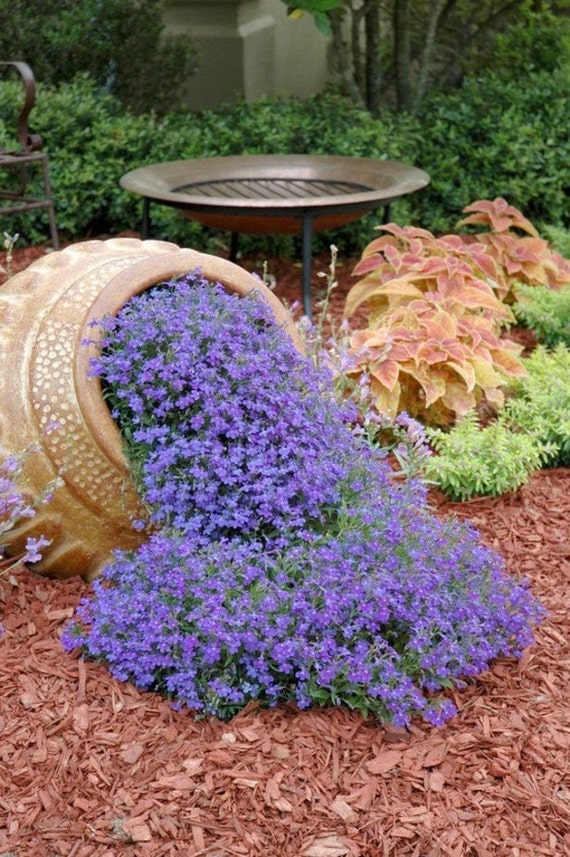 Rock cressaubrieta cascade purple flower seeds deer etsy rock cressaubrieta cascade purple flower seeds deer resistant superb perennial ground coverdry banks between flagstones along pathways mightylinksfo