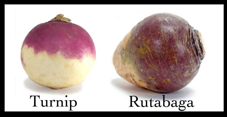 smooth globe-shaped Rutabaga Seeds Organic Non-GMO Purple Top,Large