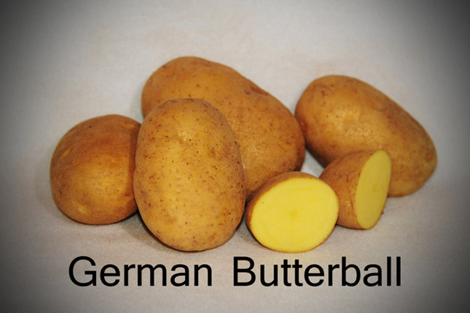 Potato, German Butterball Netted, golden yellow skin and yellow flesh. ,Speciality Potato, Excellent yields and flavor. Stores well.