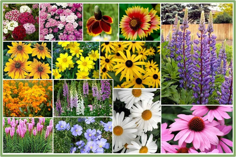 8dae8ed62d7c Partial Shade Wildflower Seed Mix Designed for those hard to