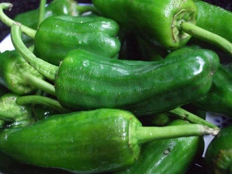 HotSweetMild,Spanish heirloom Capiscum annuum Chili Pepper,Pimientos de Padron Pepper