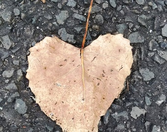 Heart Photography, Nature Photo Leaf, Digital Download