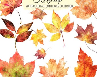 Watercolor Autumn Leaves Collection - Commercial and Personal Use