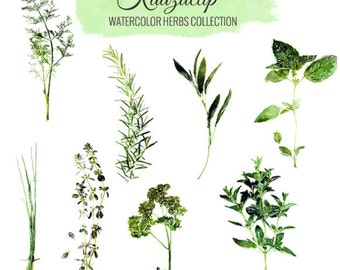 Watercolor Herbs Collection - Commercial and Personal Use