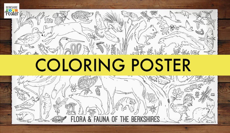 Flora and Fauna of the Berkshires Coloring Poster image 0