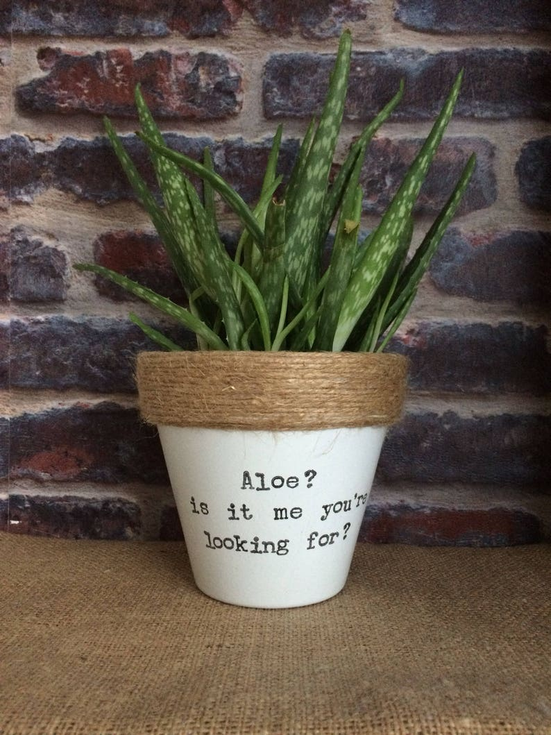 Plant Pot Gift Aloe Is It Me Your Looking For Etsy