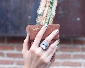 Jumpa , Grey Persian Cat Ring