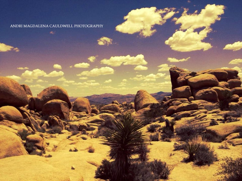 Joshua Tree National Park Wall Art Etsy