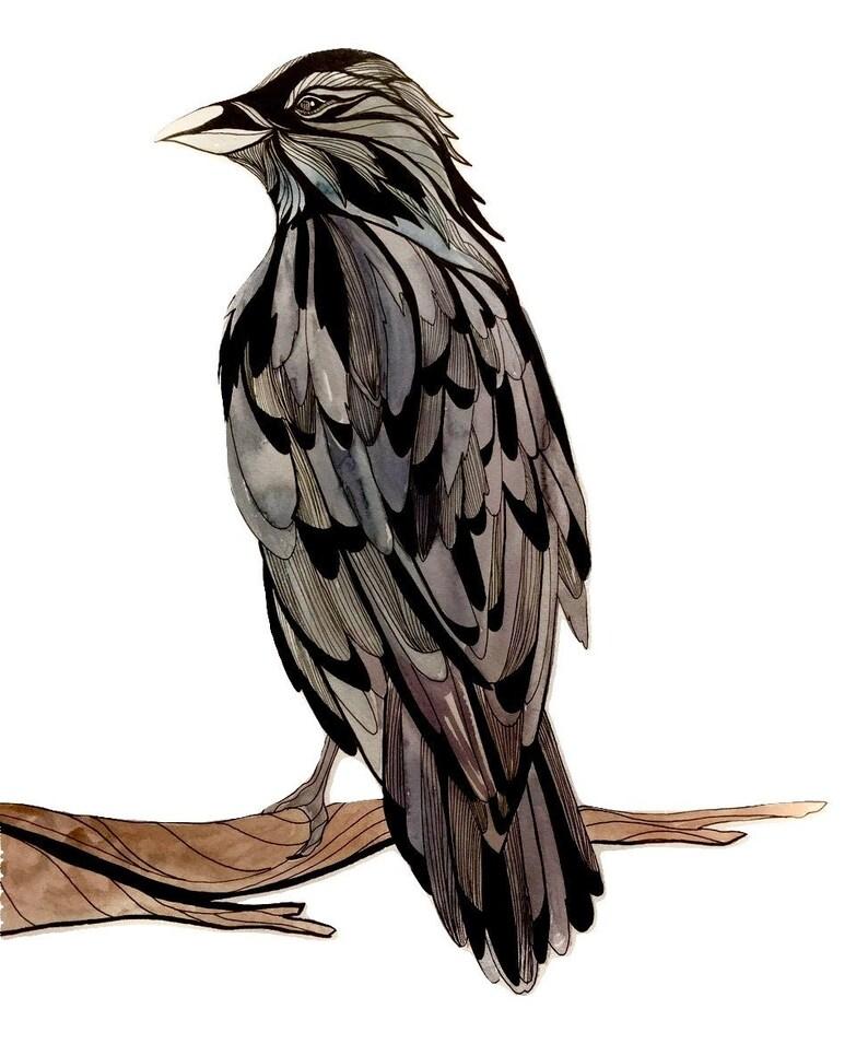 Raven Watercolor and Line Art  Original  16x 20 image 0