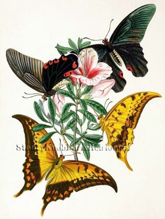 Flowers ~ DIY Counted Cross Stitch Pattern Insects Butterfly 1 ~ Gardens