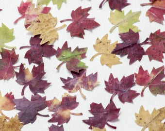 50 Maple Leaves, Mini Maple Leaves, Tiny Maple Leaves, Natural Dried Maple Leaves, Real Maple Leaf, Pressed Cut Small Maple Leaves