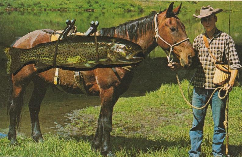 Man Horse Fish  It/'s a Fine Kettle of Fish By Merle Porter Vintage Postcard Split Back Unused Color Photo PC-152