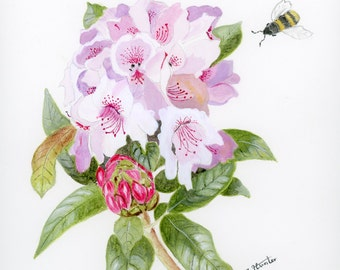 Botanical giclee print from a water colour painting of a rhododendron with bee