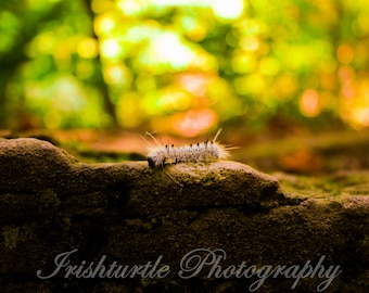 Trail Caterpillar