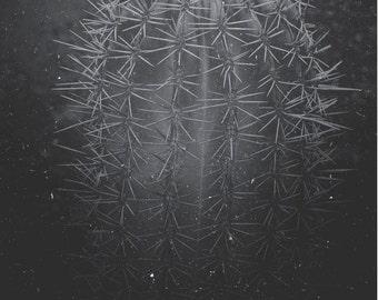 Cactus Photography, Cactus Print, Cactus Art, Desert Print, Desert Art, Black and White, Southwest Art, Wall Art, Home Decor