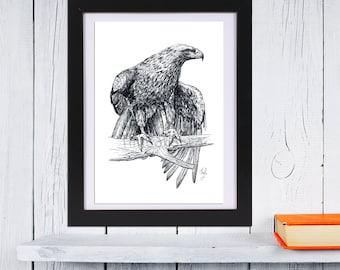 Falcon Art Print or Poster | Falcon Illustration GICLEE PRINT | Wildlife Wall Art | Wild Animal Print