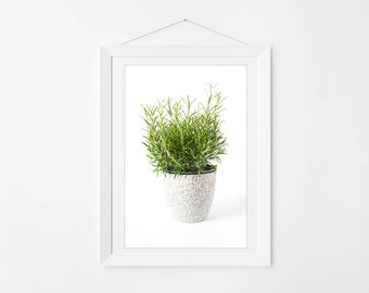 Bright Rosemary Photography Art Print for Kitchen Walls