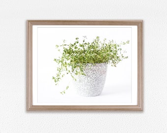 Spice Thymes Photography Art Print for Kitchen Walls