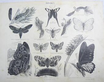 Antique Russian Page Butterflies Pre 1917 Illustration Chromolitograph Print