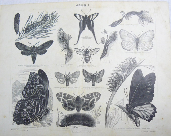 Antique Russian Page Butterflies Pre 1917 Illustration Chromolitograph Print