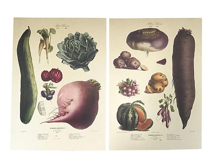 Vintage Album Vilmorin Botanical Fine Art Prints, Set of 2