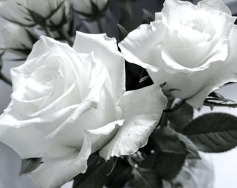 White Roses Fine Art Photographic Blank Greetings Card
