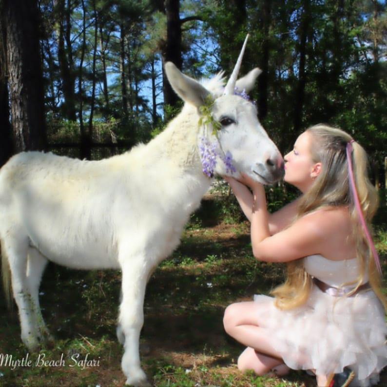 Unicorn Horn For Horse Goat Donkey Unicorn Horn Horse Etsy