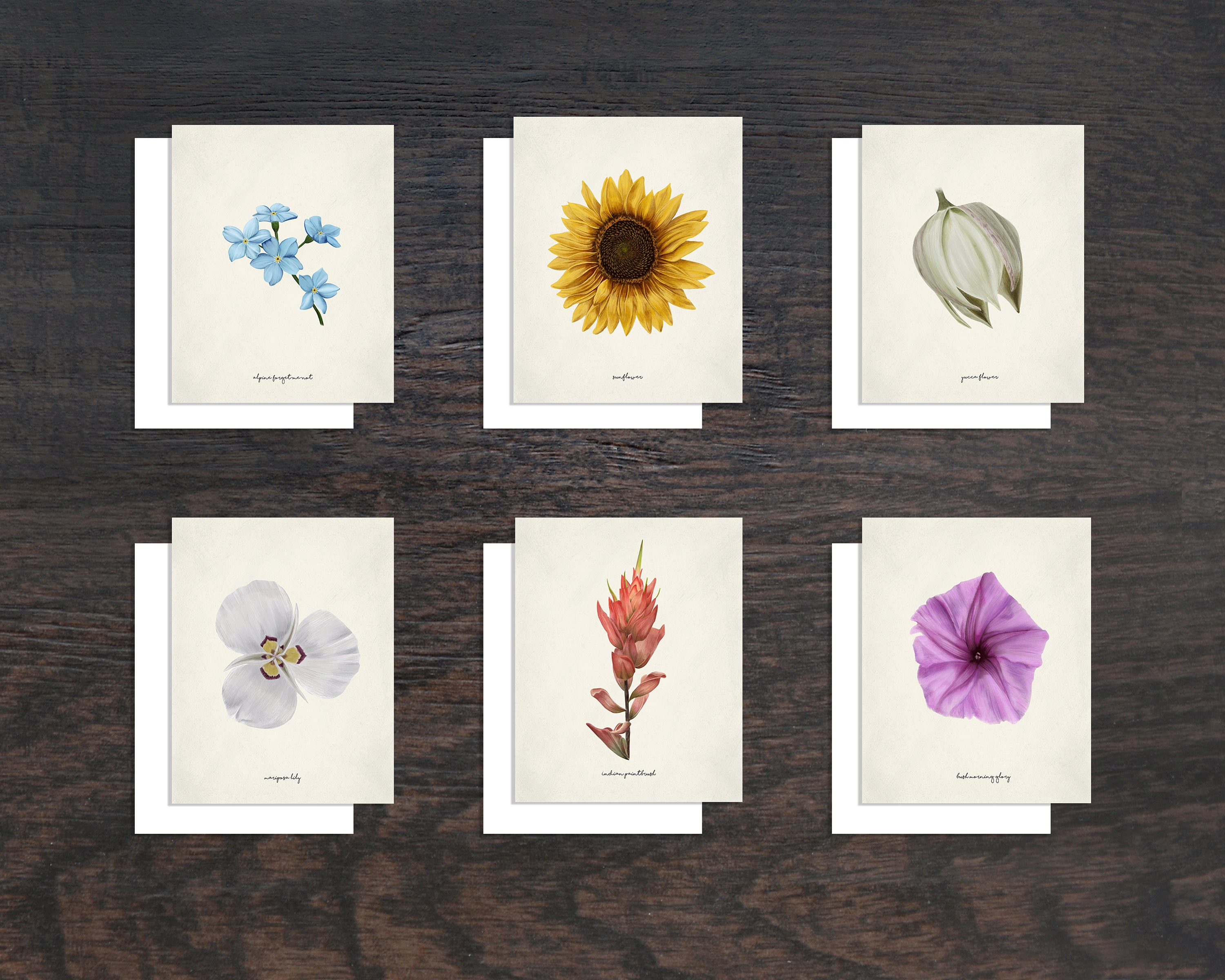 Flower Cards Floral Greeting Cards Wildflower Cards Spring Etsy