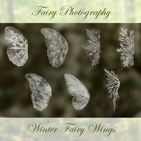 7 Digital Winter Fairy Snow Frost Wing Photoshop BRUSHES Etsy