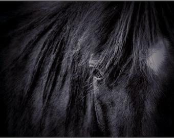 Printable Horse Art • Downloadable Art Black and White Photography Printable Art Print
