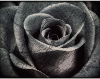Black and Grey Wall Art Printable Photography • Printable Black and White Photography Large Wall Art Digital Download Art