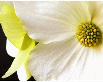 Printable Botanical Art Digital Download Art • Modern Art Digital Download • Yellow, Green, Black and White Printable Wall Art