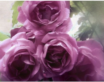 Rose Art • Shabby Chic Decor • Large Wall Art Also Available on Gallery Wrapped Canvas 16x20 20x30 and More