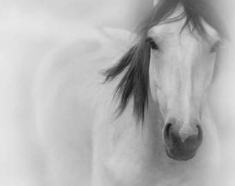 Horse wall art Printable Horse Photography in Black and White - Printable Large Wall Art Print Digital Download
