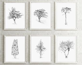 set of 4 tree drawings giclee print of a cork oak pine etsy