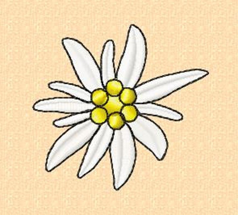 Embroidery pattern  Edelweiss 5  in 2 sizes image 0