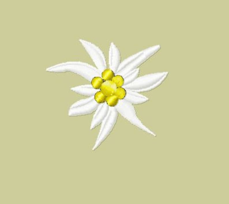 Embroidery pattern  Edelweiss w/o leaves image 0