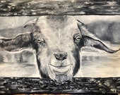 Very detailed black and white goat animal painted in oil on canvas varnished