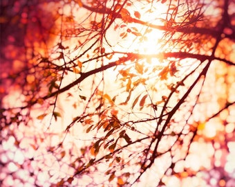 Nature photography, Trees, Branches, Leaves, Sunshine, Sparkly, Lake, Red, Orange.