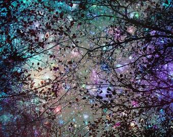 Photography, Night sky, Trees, Stars, Fine art print, Blue, Colourful, Wall Decor