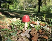 Cute Red Cap Magical Toadstool. Handmade Needle-Felted Whimsical Amanita Mushroom woodland fiber art OOAK