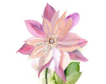 Watercolor flower, pink Clematis. Art print.