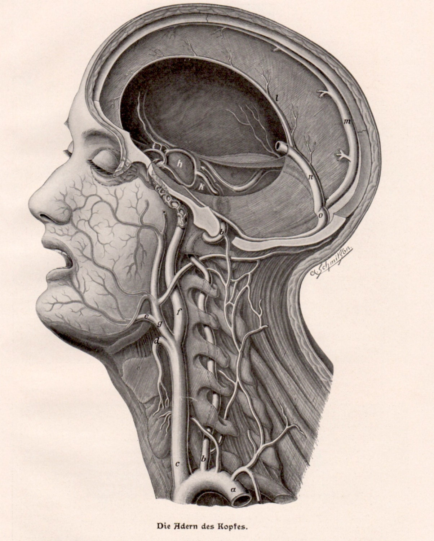 1924 menschlichen Kopf menschliche Körper Anatomie Antique | Etsy
