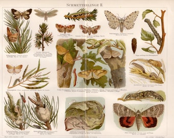 1897 Butterflies Antique Print, Schmetterlinge, Insects, Zoology, Butterfly, Moths, Caterpillars, Pupa, German Chromolithograph, Vintage