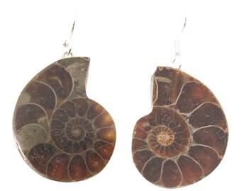 Ammonite Shepard's Hook Earrings