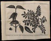 1743.Antique botany copper engraving.Natural History. quot Nature Display 39 d quot WOODS foliages Antique print.Copper plate.8.2x6.4 inches-20x17,5 cm.