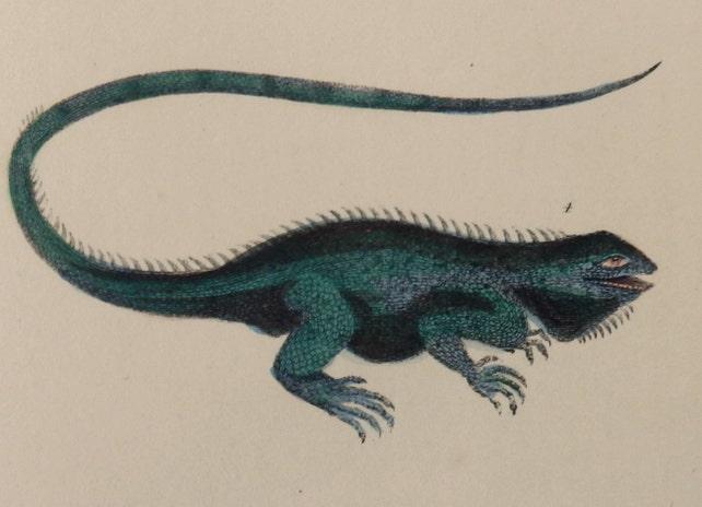 1866.Grabado coloreado a mano.La Naturaleza | Etsy